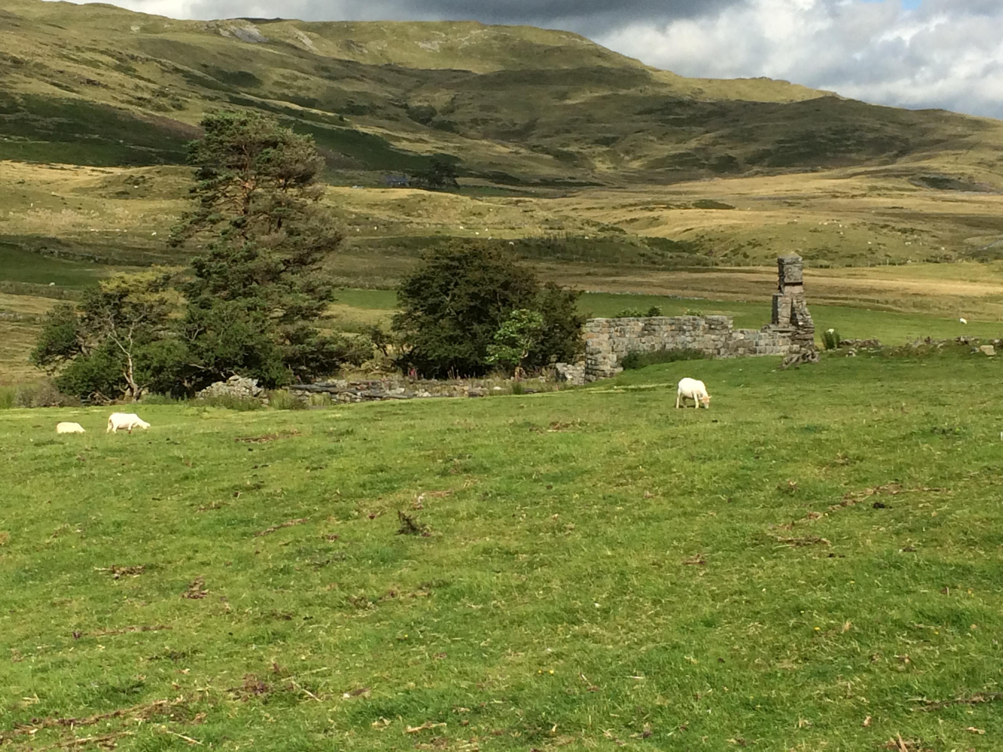 Tomen y Mur, Gwynedd